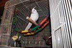 Unsafe Bird Toys: How To Avoid Them | BirdTricks